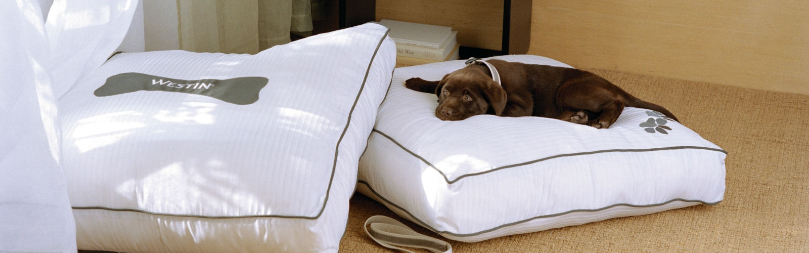 Pet friendly hotels vancouver airport the westin wall for Pet friendly hotel vancouver